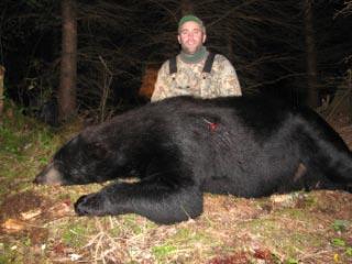 bear3-1